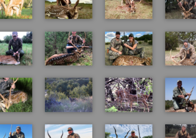 Exotic Hunting Pictures