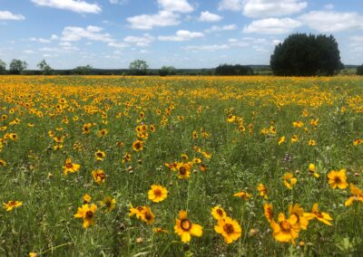 Field of Flowers Day