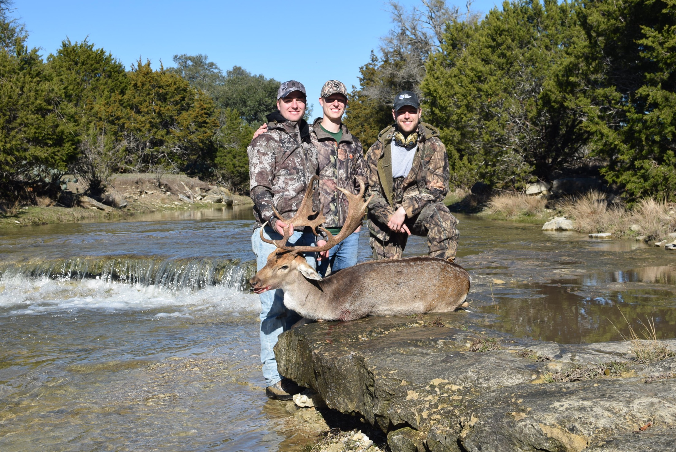 Fallow Deer Hunts