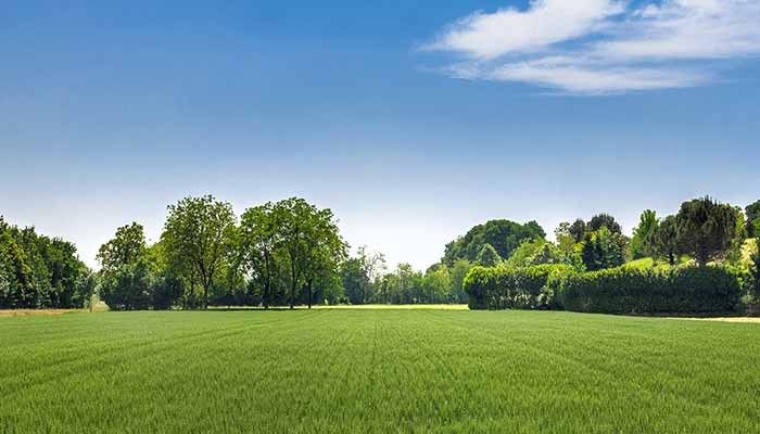 Home building lot with grassy field and trees in Northeastern Wisconsin