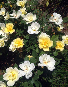 Wellspring Reiki flowers