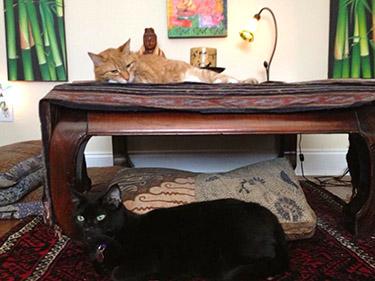 Wellspring Reiki cats