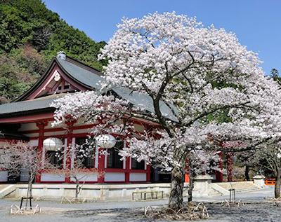 Reiki at Mount Kurama