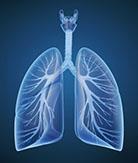 lungs - quitting smoking