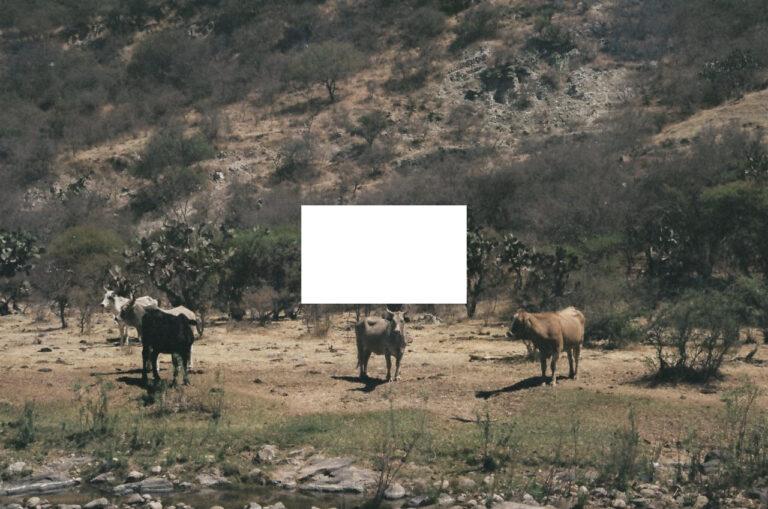 Cañada de la Virgen carne orgánica reses