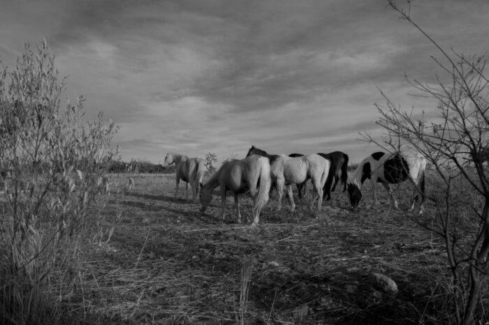 Cañada de la Virgen carne orgánica animales