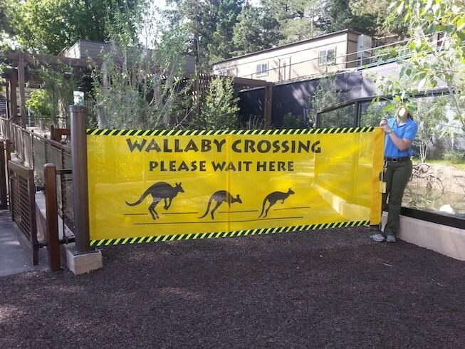 Sidewinder Wallaby Crossing Barrier