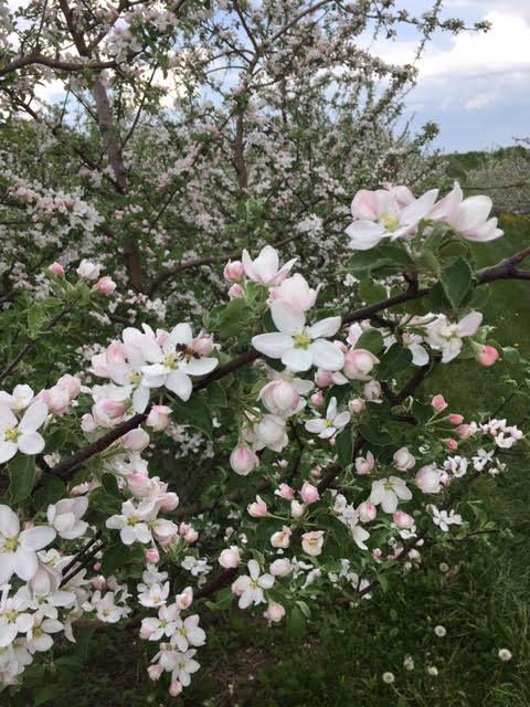 May 25 - bees.2