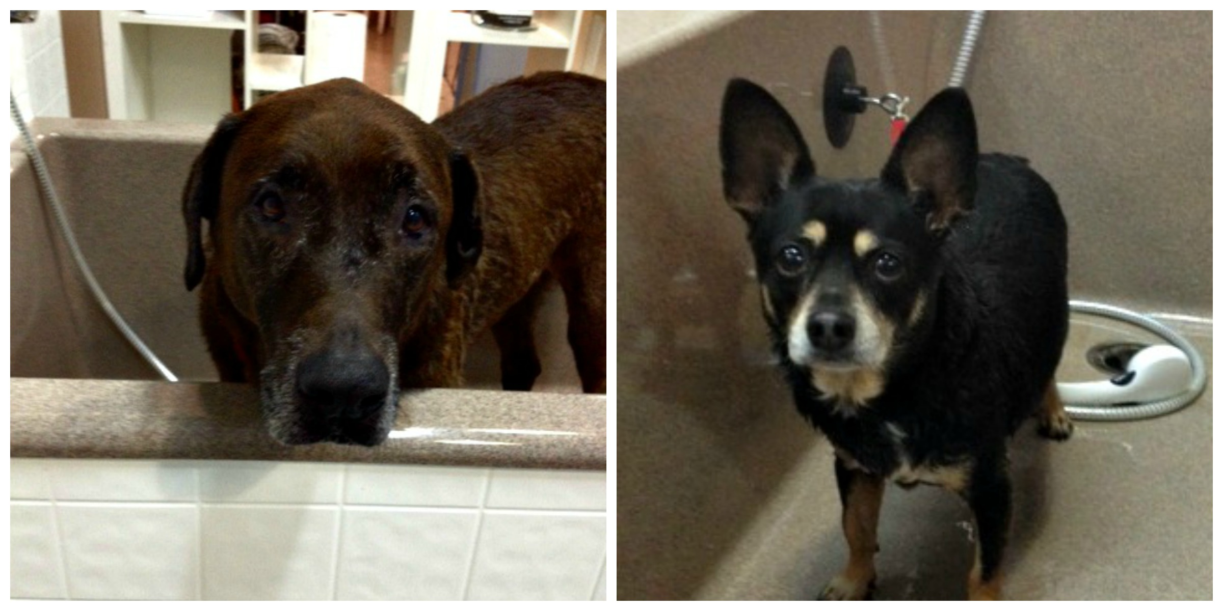 Abe and Chico in the bath!