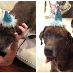 Abe Turns Ten- Let's Celebrate Senior Dogs- The Pack Mom