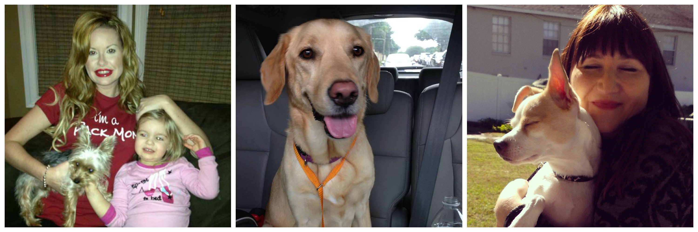 Luca, Hazel and Murphy- Three healthy, happy dogs