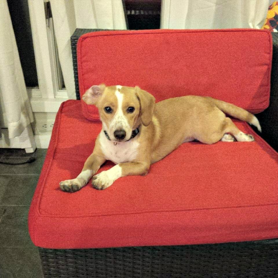 Trooper, one cute hound!