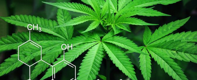 Andrea Holmes, Ph.D. - Learn About the Minor Cannabinoids!