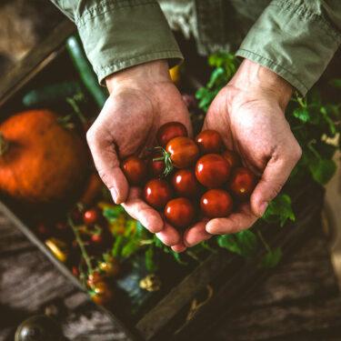 Farm-CropInsurance