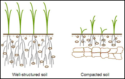 Compacted-Soil