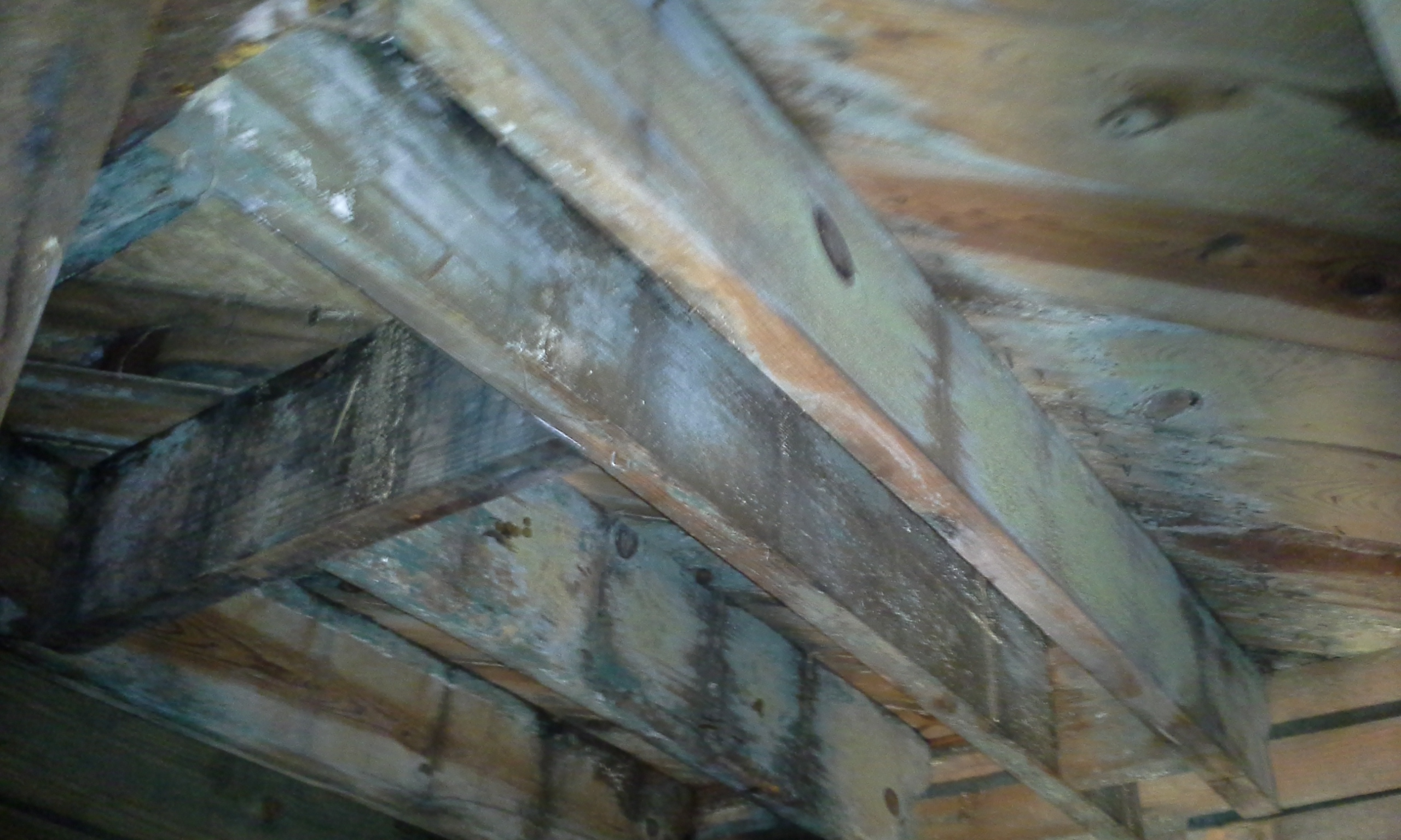 MOLD IN YOUR CRAWL SPACE – Charlotte NC