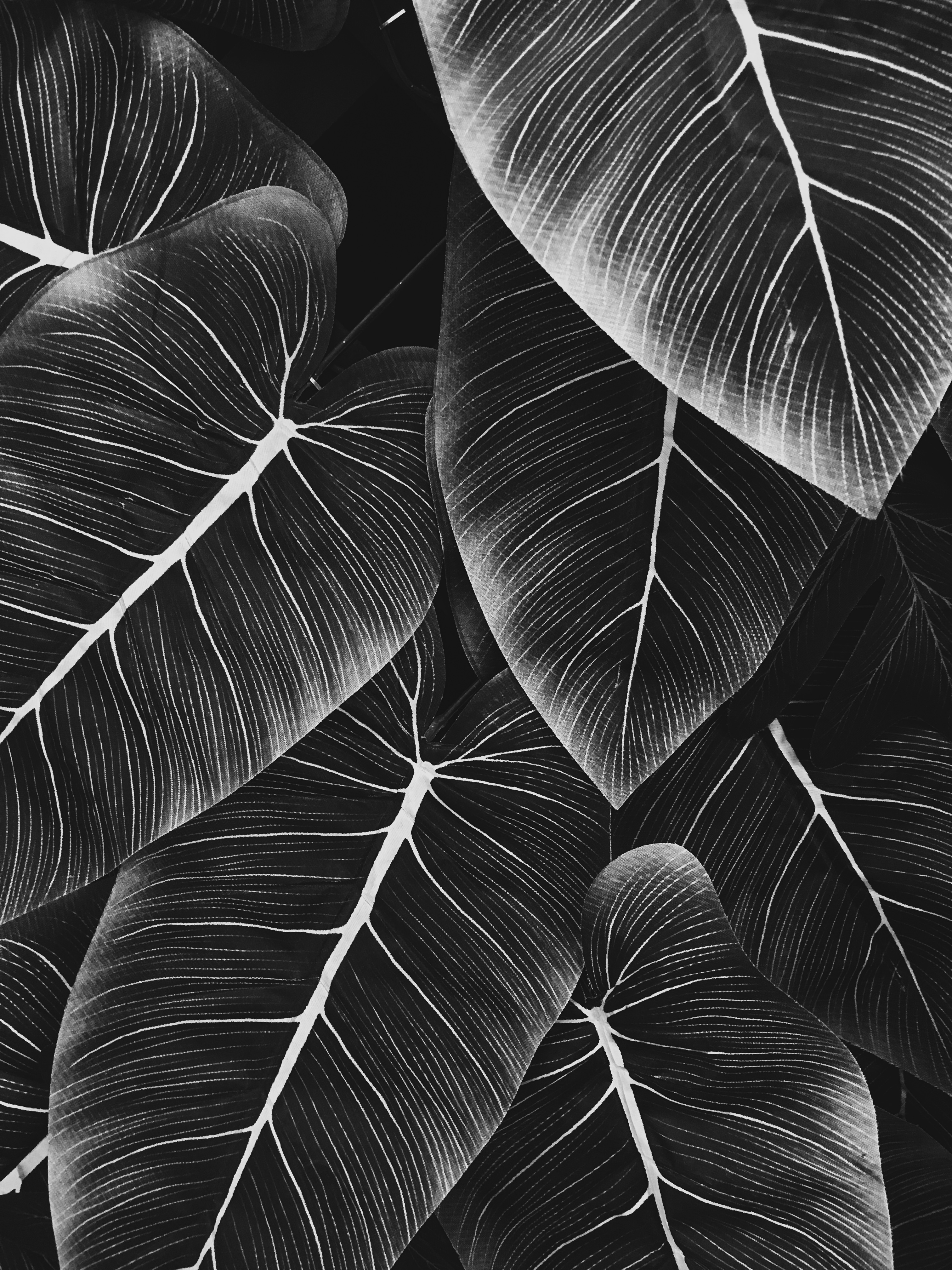 fd photo studio-los angeles-live clothes minded-fake leaves-black and white