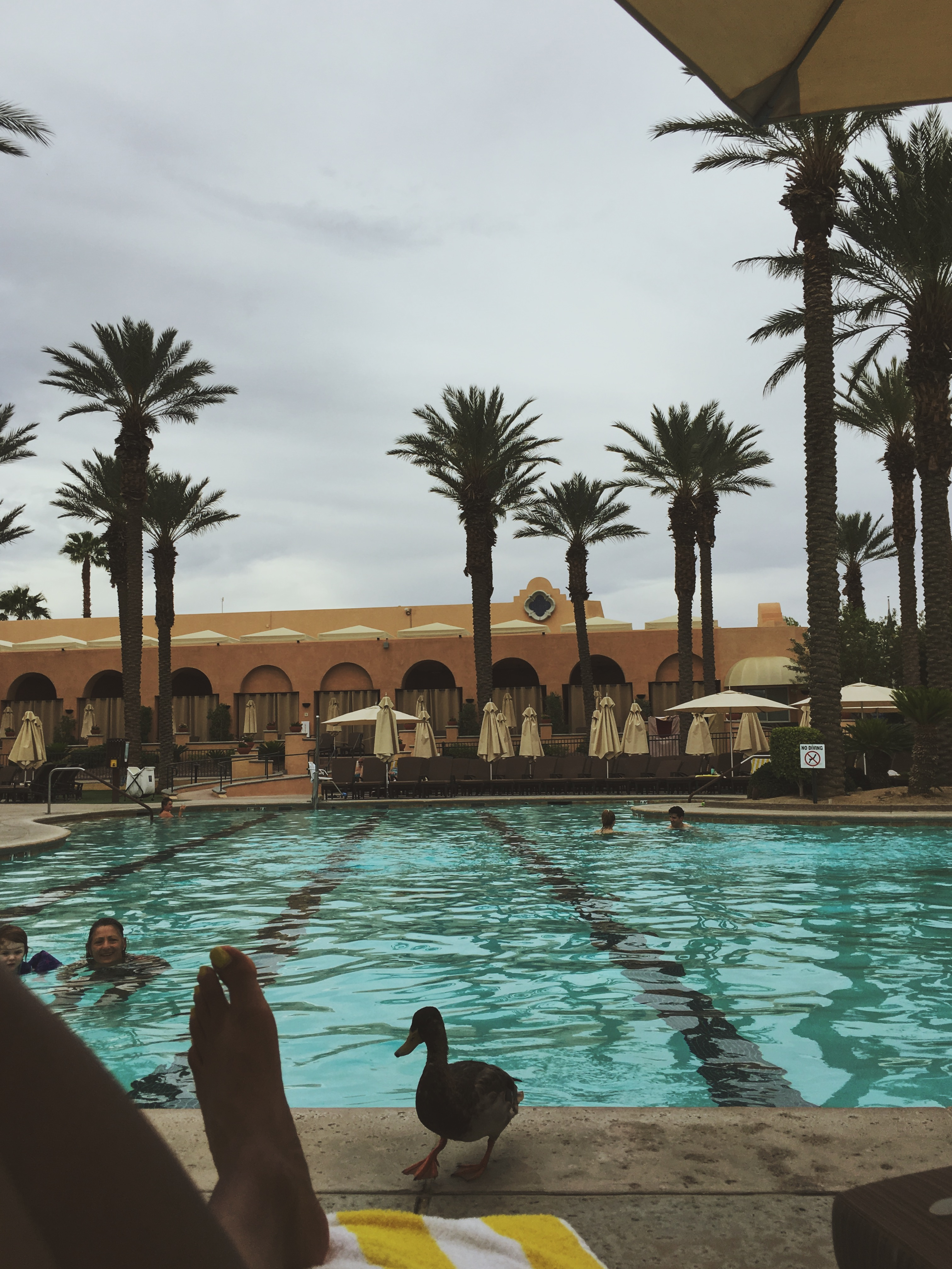 things to do in palm springs-the westin-pool