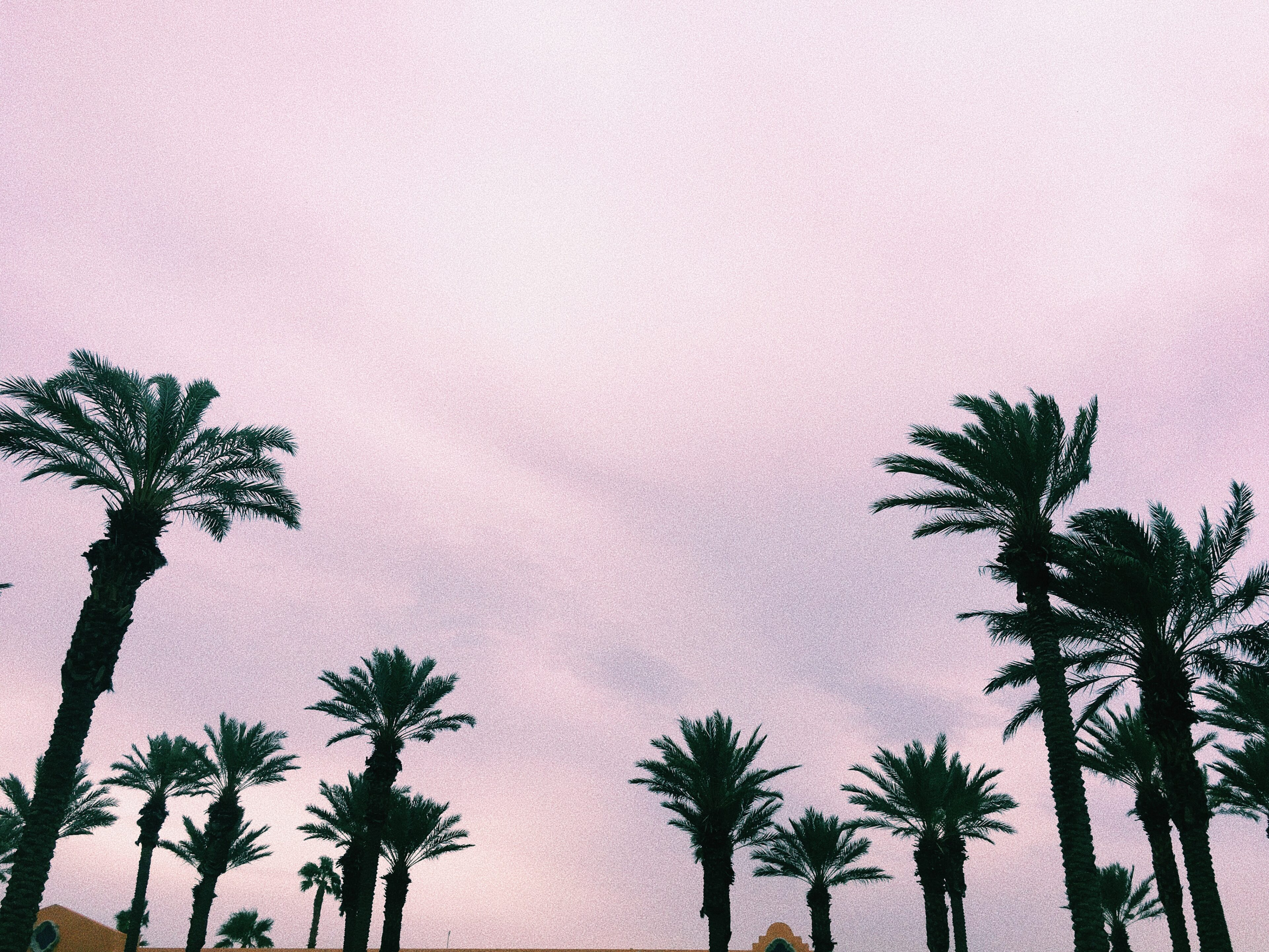 the westing-palm trees-palm springs