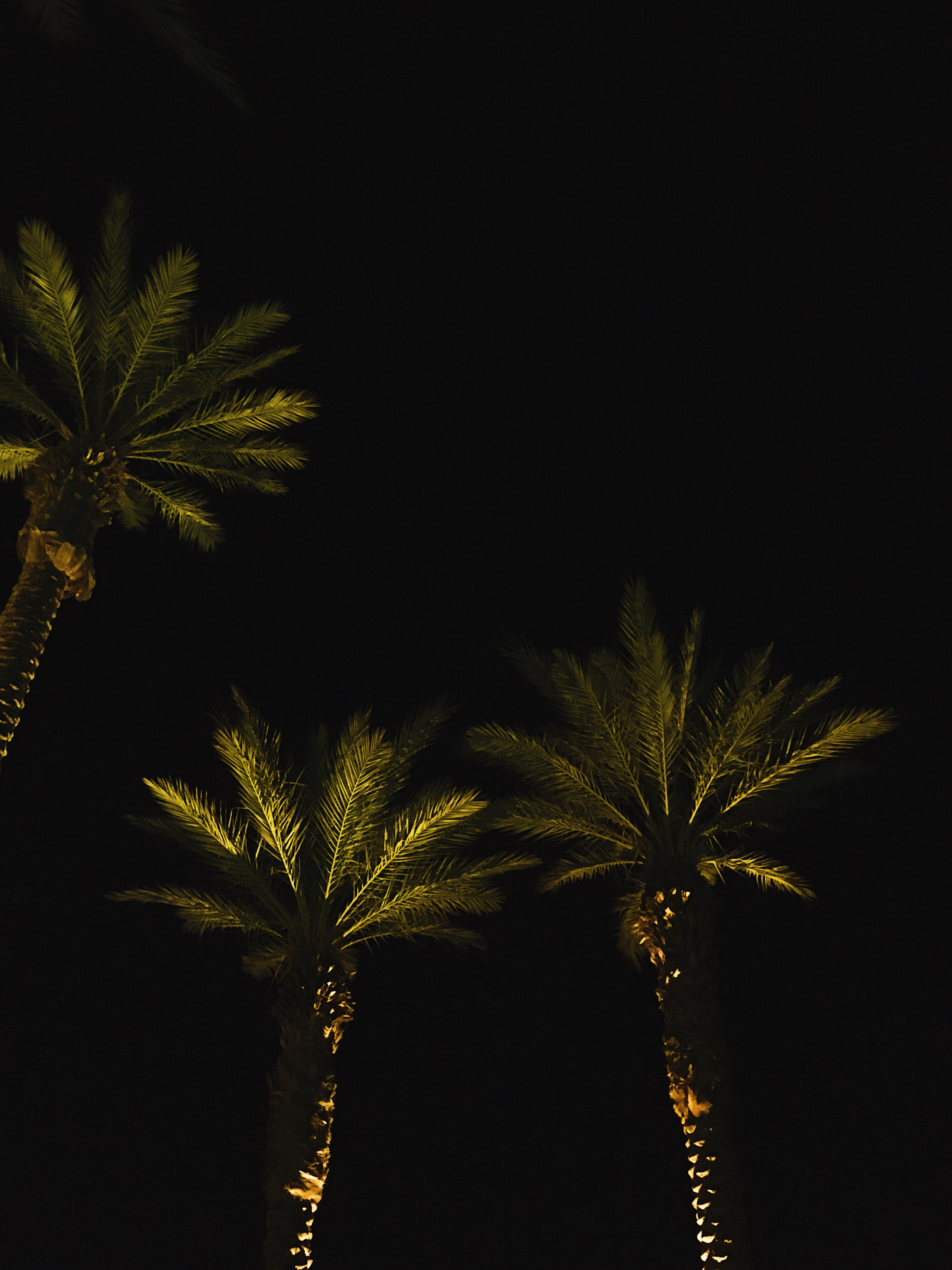 things to do in palm springs-palm trees-desert-liveclothesminded