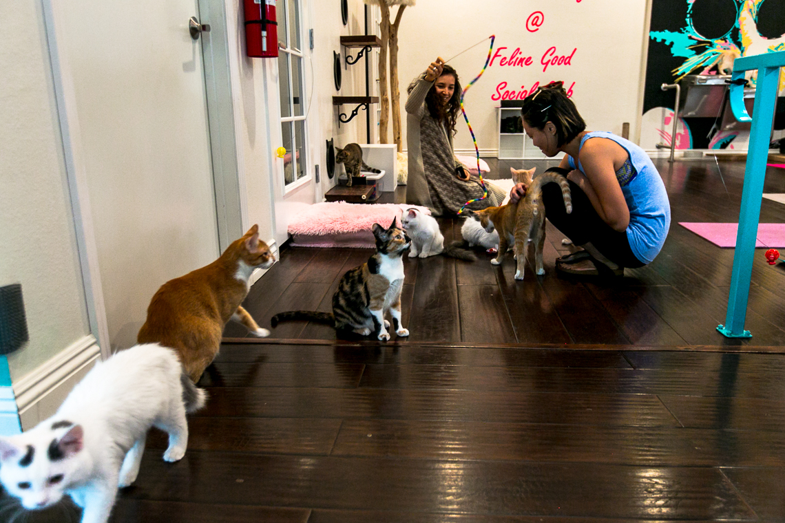 feline good social club-cats & mats yoga-xmmtt-rsee