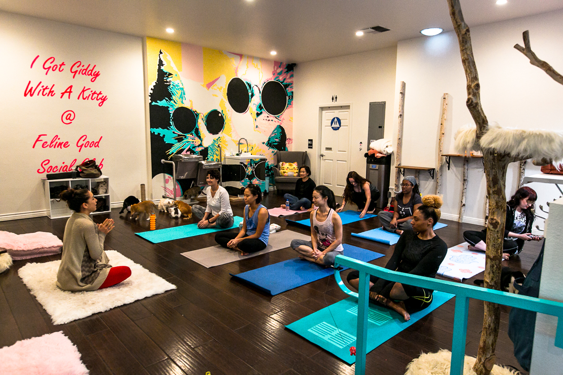 cats & mats yoga-feline good social club-xmmtt-rsee