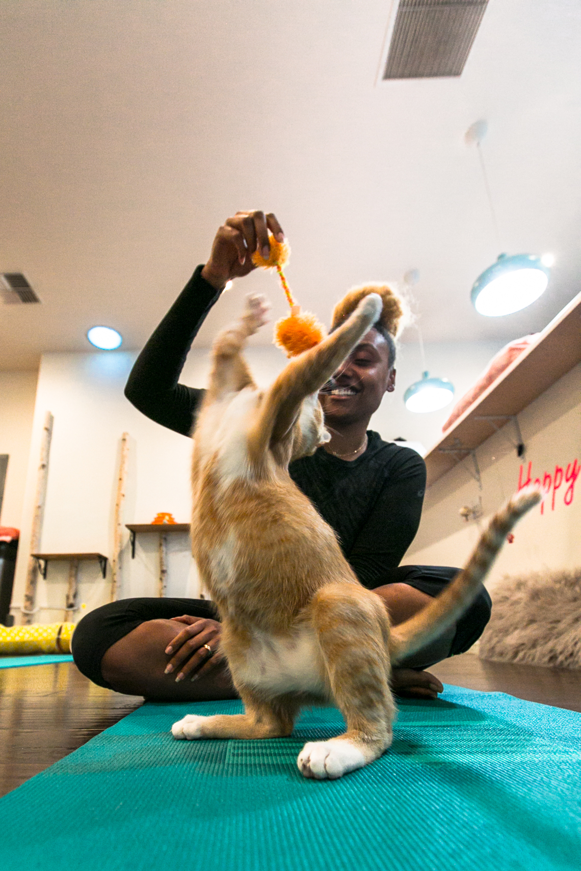 cat playing with toy-yoga-feline good social club-xmmtt-rsee-lcm
