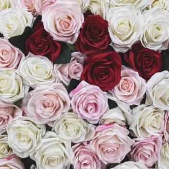 gods grace-fd photo studio-fake roses-pink-red