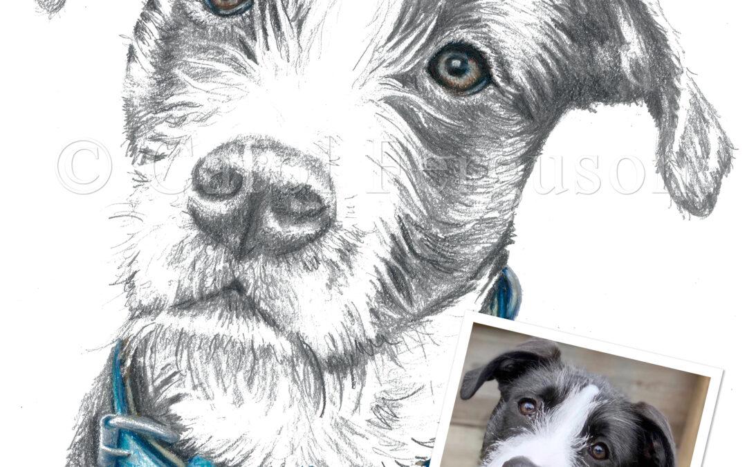 Custom Pet Dog Portrait for Houston TX Dog
