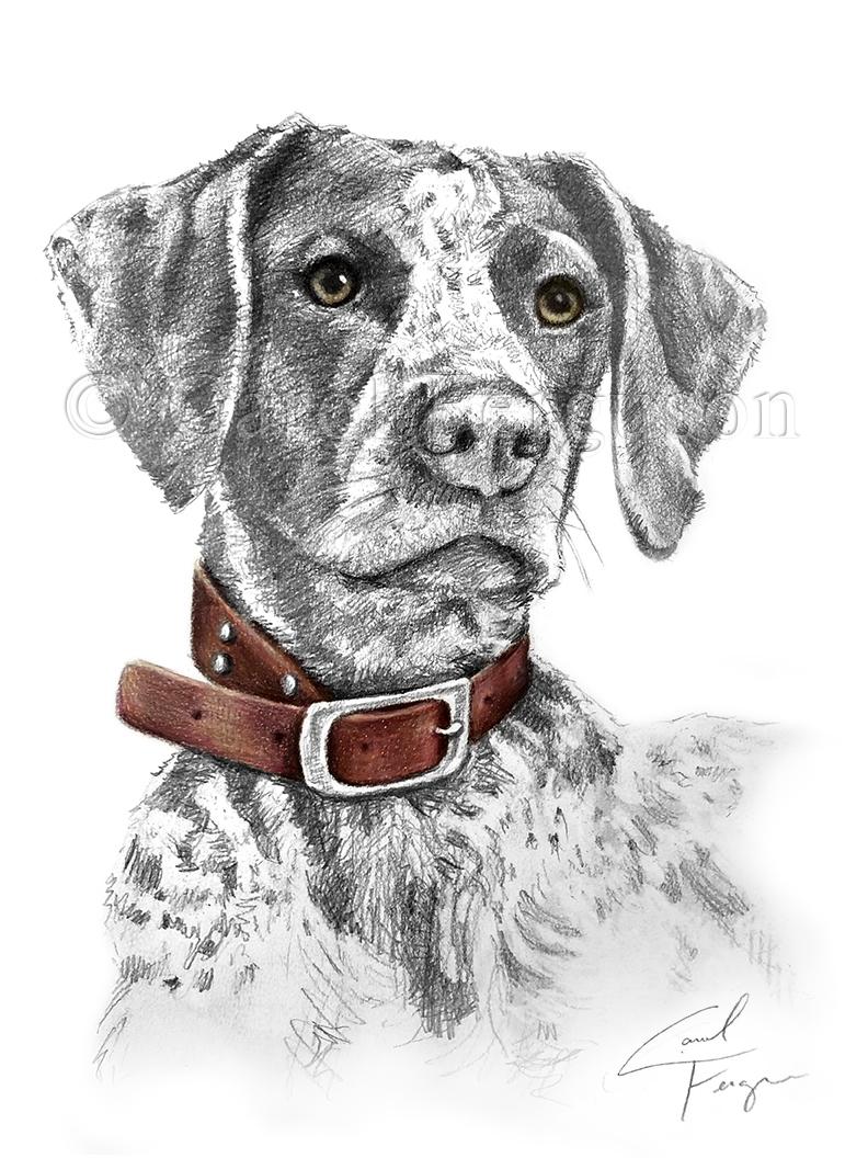 Carol Ferguson Art, Graphic Pencil Drawing, Alabama Pet Portrait Artist, German Shorthaired Pointer Hunting Dog Art Gift