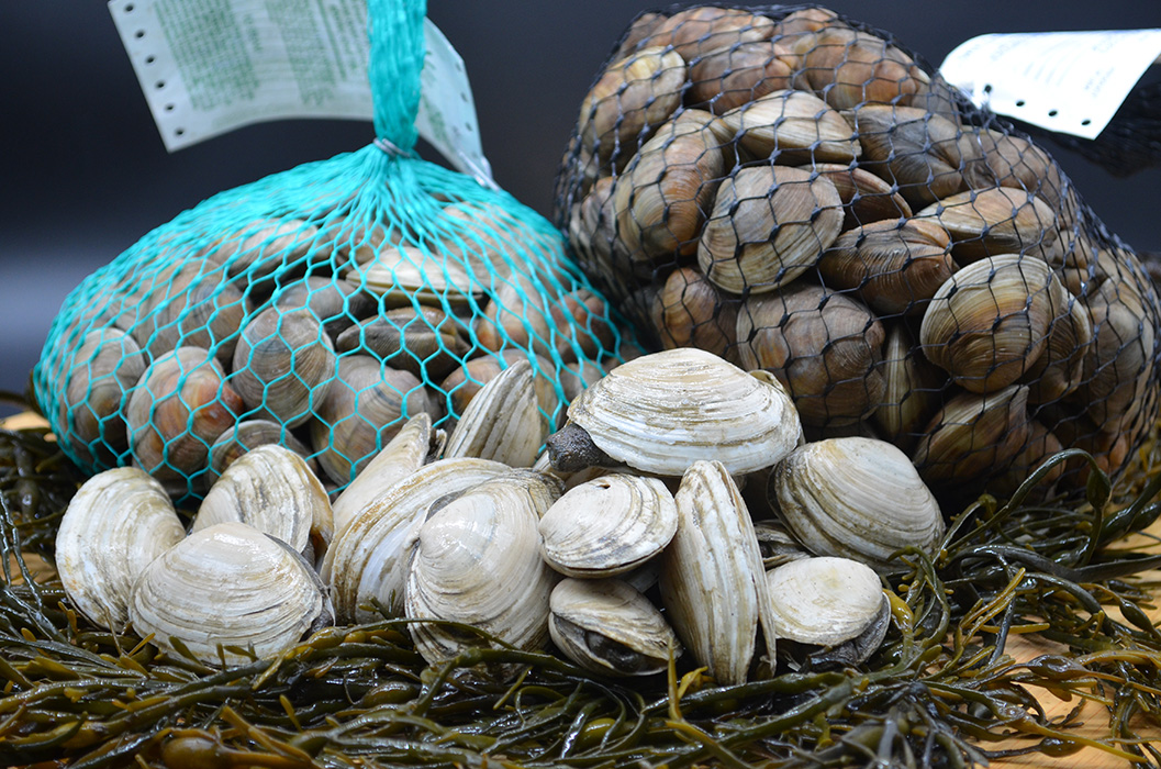 Bar Harbor Seafood live steamers, littleneck and middleneck clams loose and in two bags
