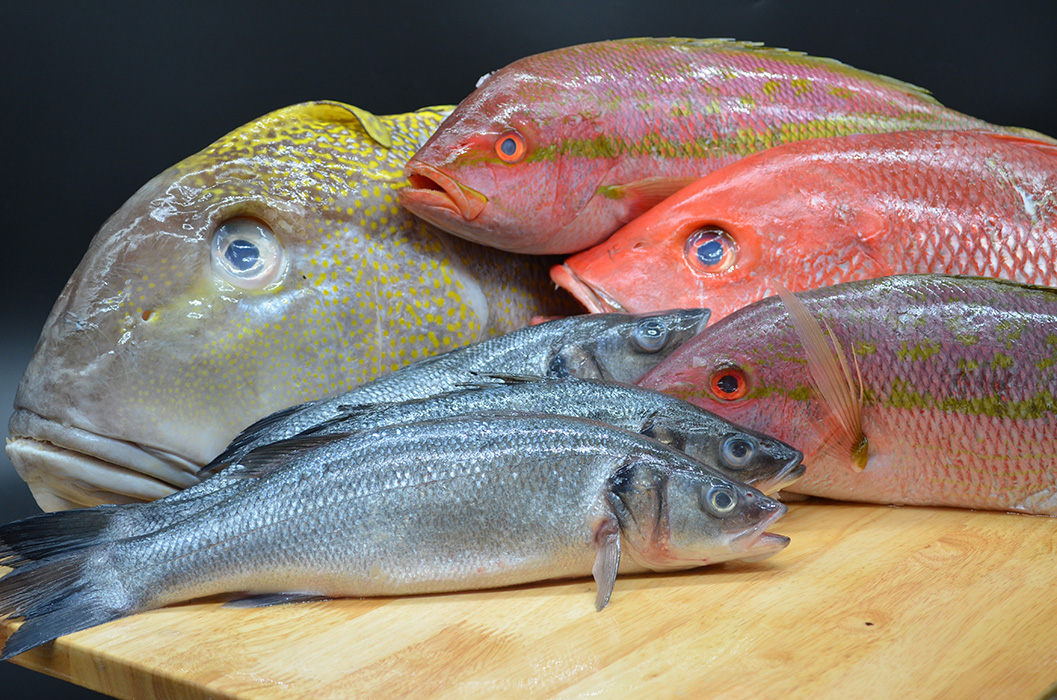 Bar Harbor Seafood fresh fish display with bronzini, red and yellow snapper, yellowtail