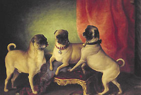 Painting of 3 pugs