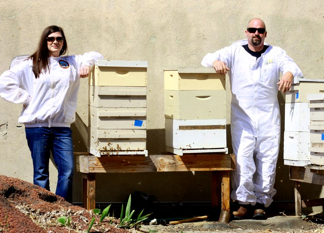 Orange County Bee Removal