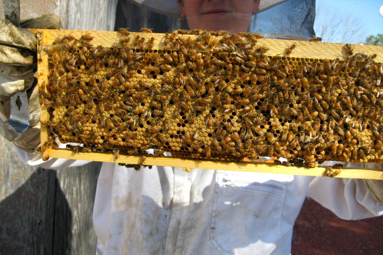 bee-rescue