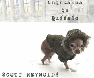 SPOTLIGHT: Chihuahua in Buffalo