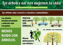 LOS ÁRBOLES ASÍ NOS MEJORAN LA VIDA