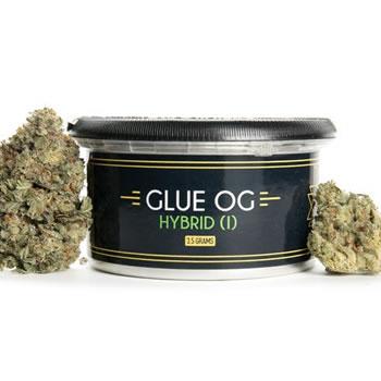 Glue OG