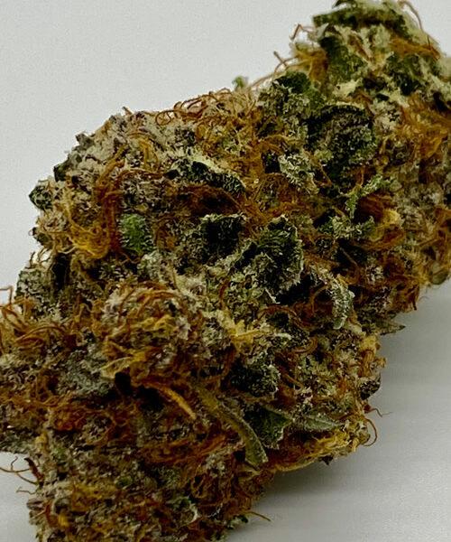 Jungle Diamond