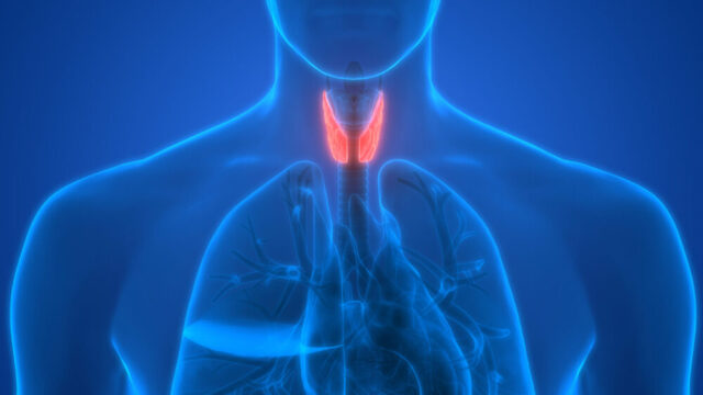 Your Thyroid: A Small Gland That Can Cause Big Problems