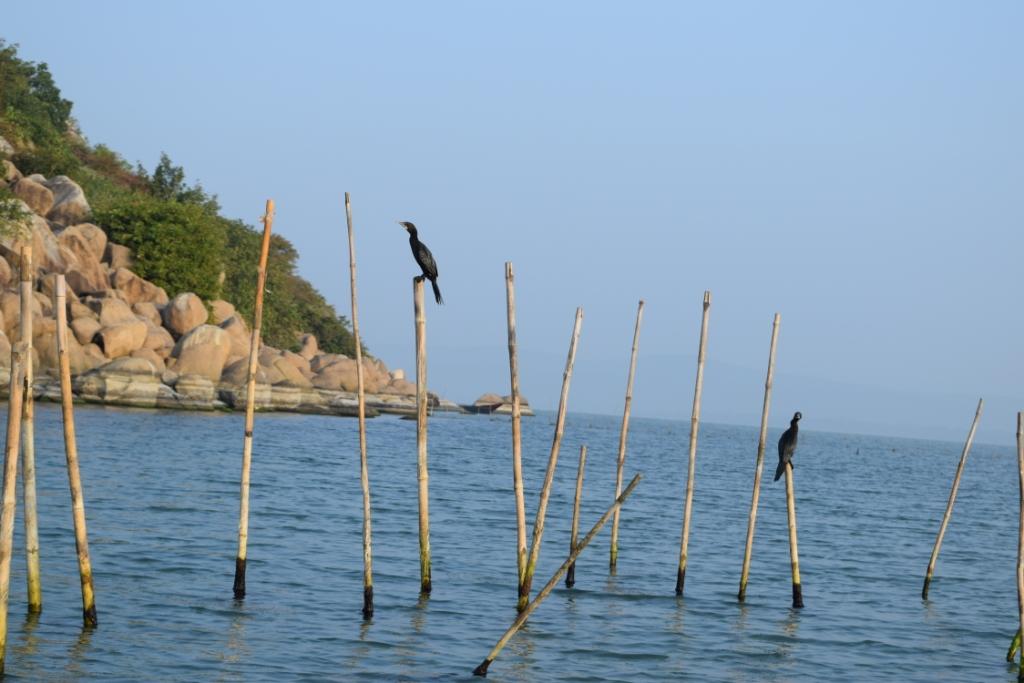 Birds Island -2