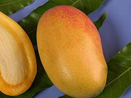 Coconut Cream Mango's