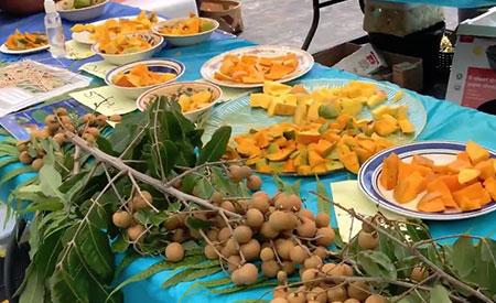 Fruitscapes-Mango-Fest-2018-1
