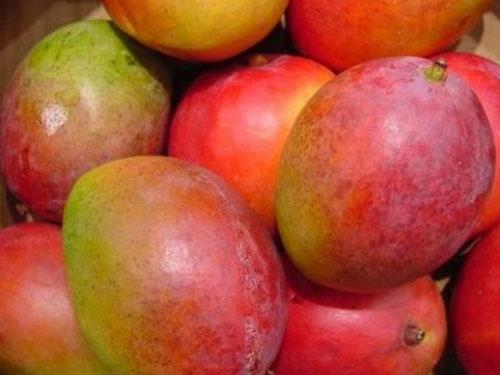Haden Mango's