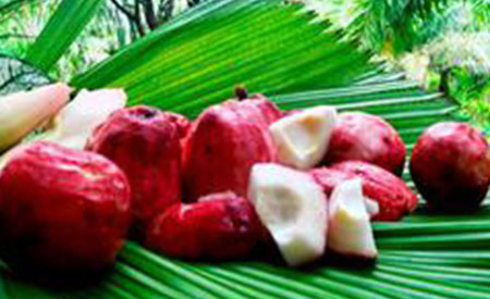 Malay-Apple-3
