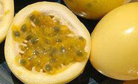 Passion-Fruit-3