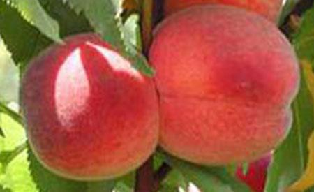 Peach-3