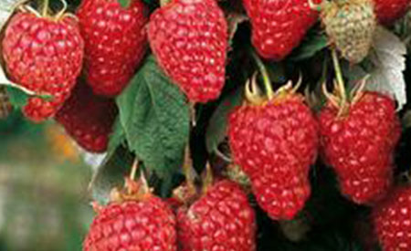 Raspberry-3