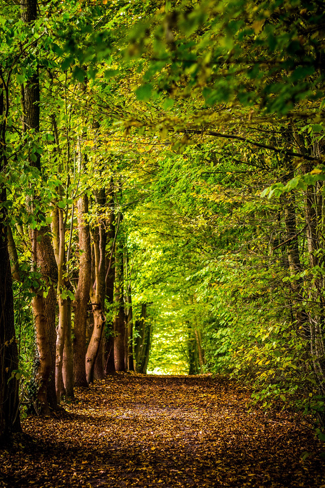 Path in the green forest, stillness