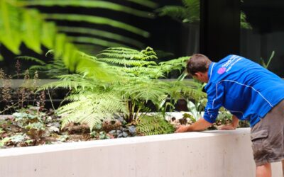 Media Release: ACT landscape specialist launches dedicated maintenance business